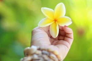 Bild Aloha Hooponopono Original Mediation
